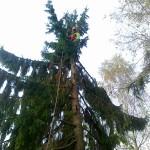 Podiranje dreves 1