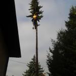 Podiranje dreves 2