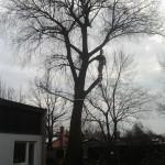 Podiranje dreves 4
